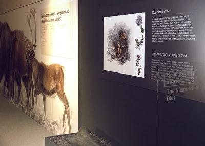 Wallmarketing Anthropos – Moravské zemské muzeum v Brně 03